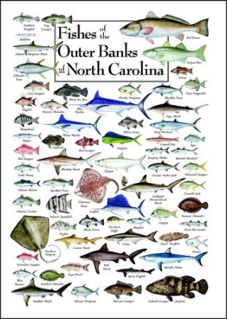 Outer banks fish poster outer banks knick knacks pinterest for Outer banks surf fishing tips