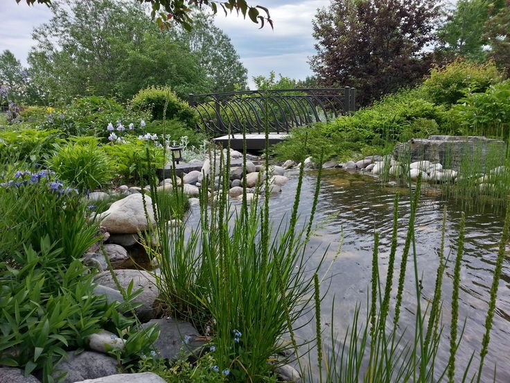 Natural Looking Backyard Ponds : natural looking pond  GardenWater Features  Pinterest