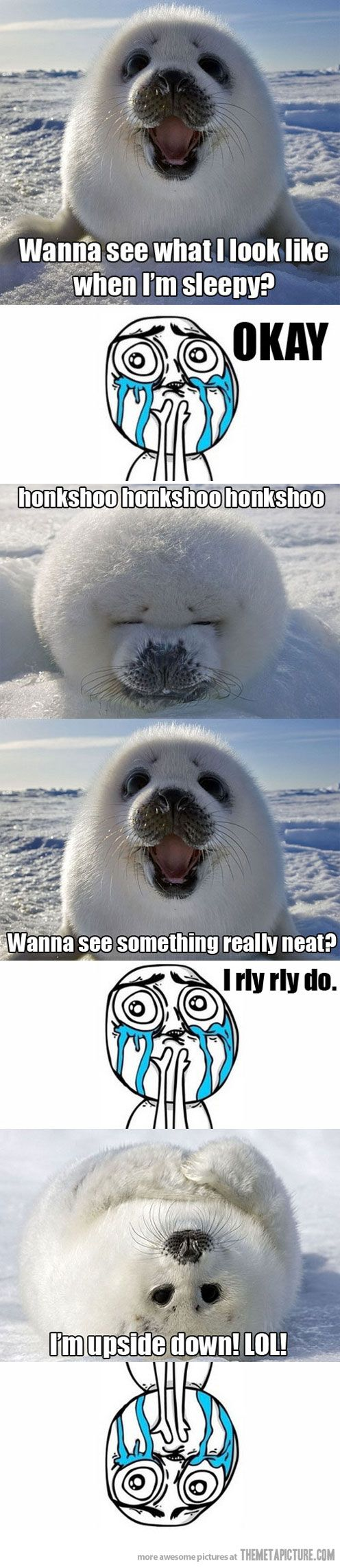 Baby seals are so adorable.