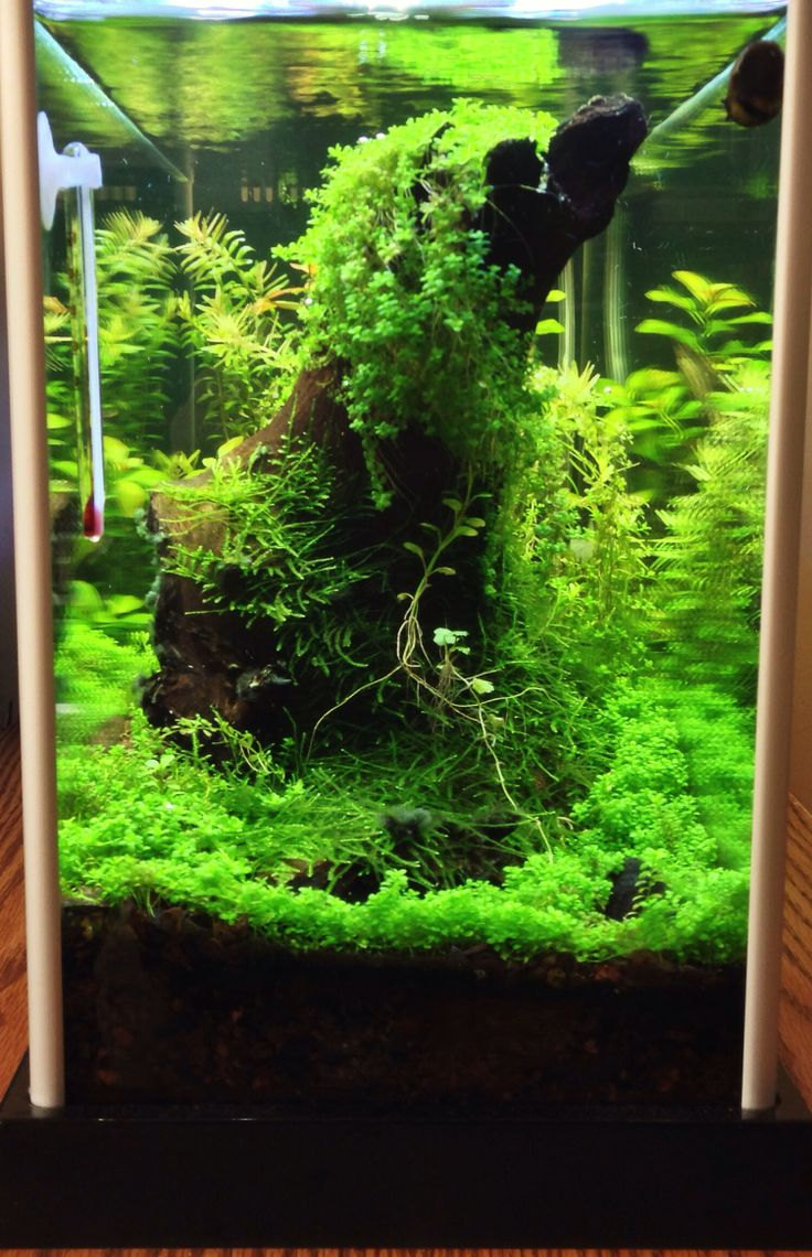 pin by pepe corgi on aquascape pinterest