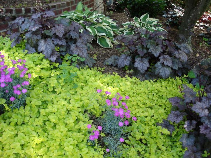 Shade Plants Outdoor Shade Plants Pinterest