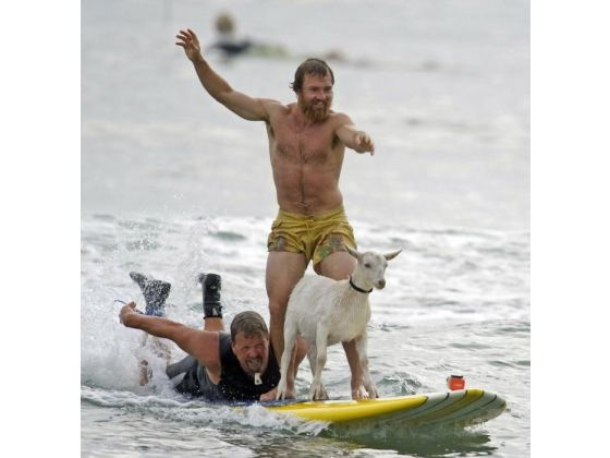 Pismo and goat herder Dana McGregor surfing together at San Onofre State Beach. PHOTO BY ROD VEAL, FOR THE ORANGE COUNTY REGISTER