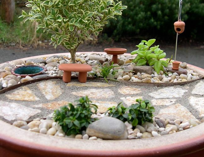 mini jardim terrario : mini jardim terrario:mini jardim e terrario – Pesquisa do Google