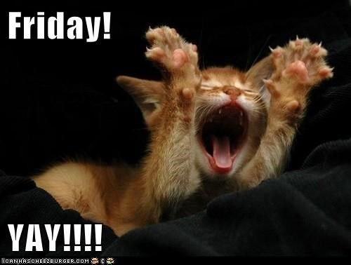 Friday, yay! :)   Pet Memes   Pinterest