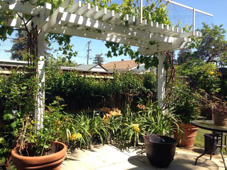 Pergola With Vines : Pergola with grape vines  Flower Garden  Pinterest