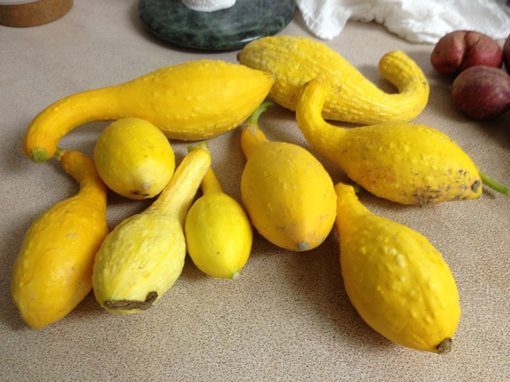 how to prepare and cook squash