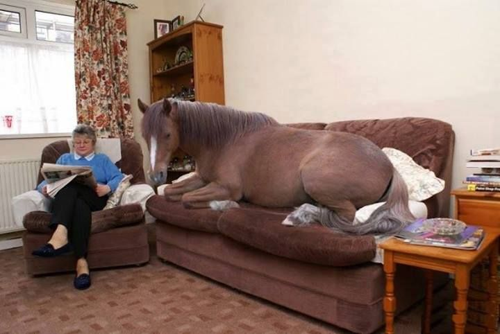 You know, just relaxing in the living room with my horse...