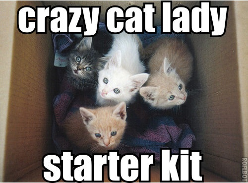 how to become a crazy cat lady