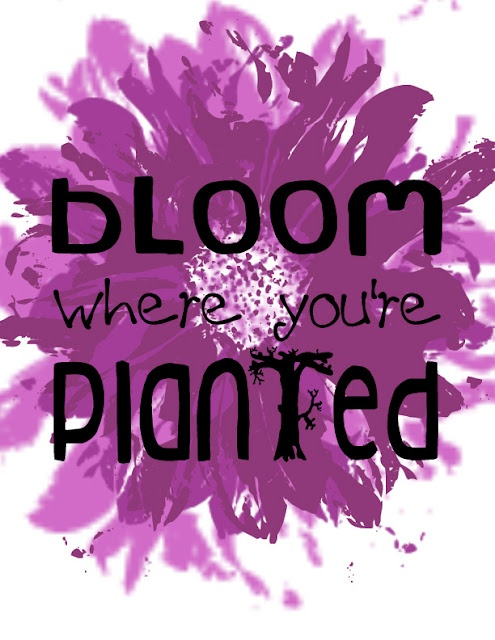 Frame this - Bloom where you're planted