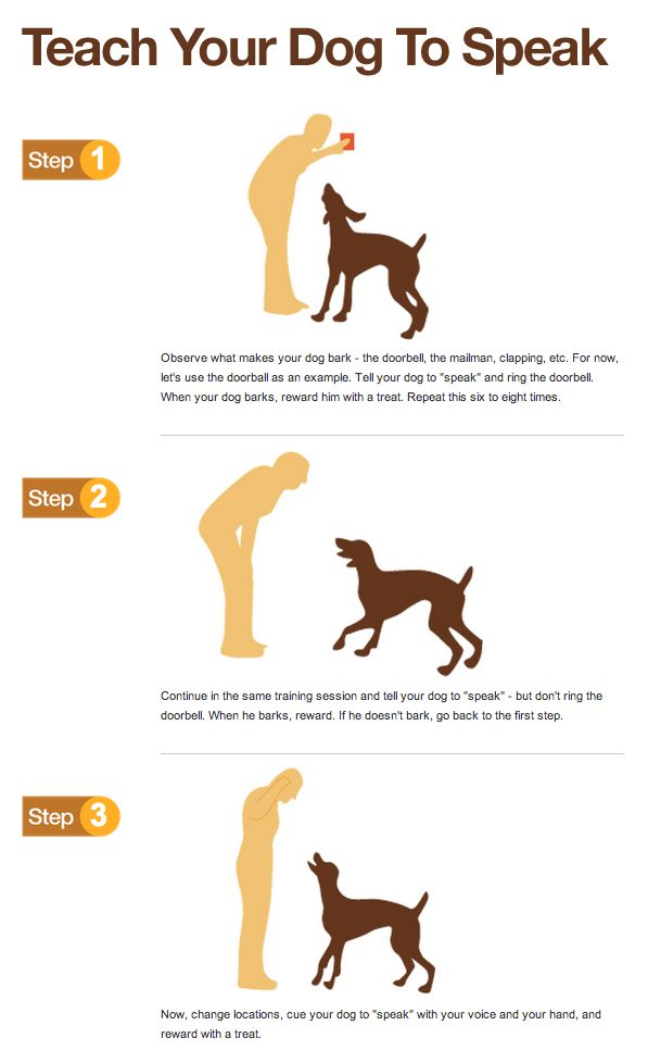 How To Train Your Dog To Stay Down