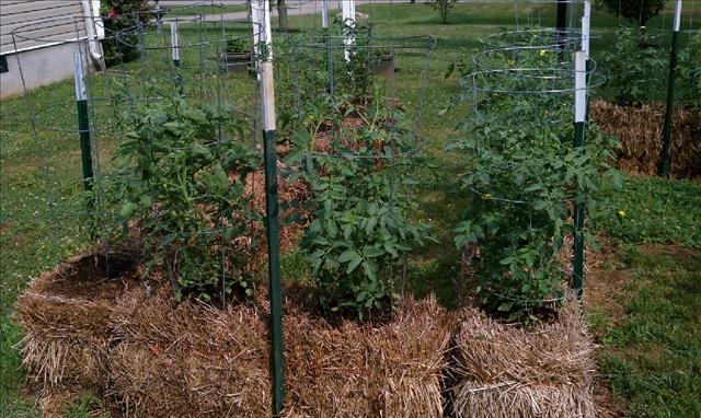 straw bale garden gardening Pinterest