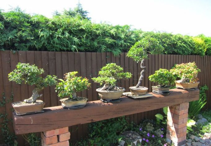 Backyard Bonsai Display : Found on bonsaibarkcom