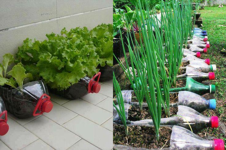 Plastic bottles gardening pinterest - Plastic bottles for gardening ...