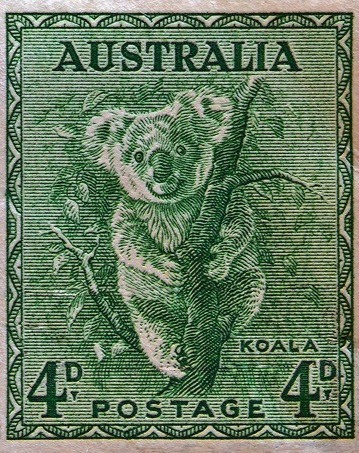 1937 Australia Koala Stamp Print By Bill Owen