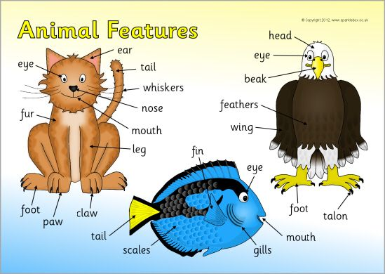 Animal Features Word Mat English For Kids Pinterest