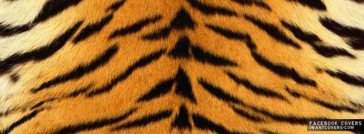 Tiger stripes (bengal) | PATTERNS AROUND US | Pinterest