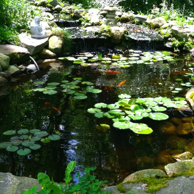pond life landscape water garden pinterest