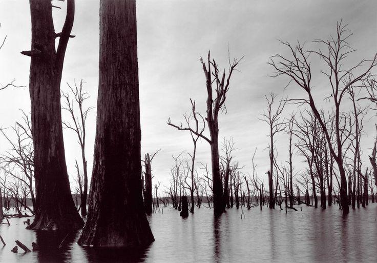 David Stephenson - Drowned No. 121 (Lake Echo, Tasmania),2002