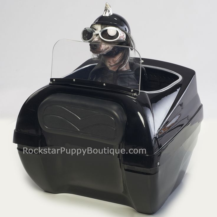 Rear Mounted Motorcycle Dog Carrier