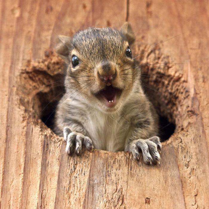 cute, happy squirrel | Art | Pinterest