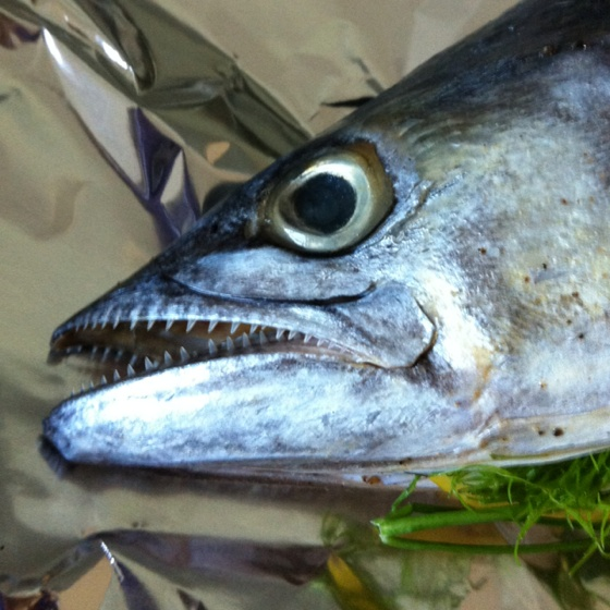 Spanish Mackerel Fish I 39 Ve Caught Pinterest