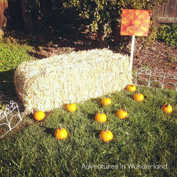 Backyard Pumpkin Patch Party :  fall festival an autumn themed birthday party adventures in wunderland