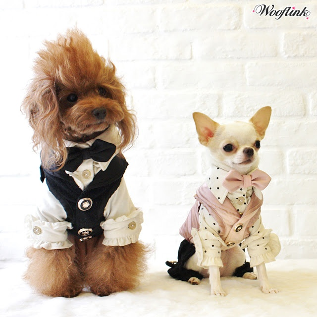 Hip designer dog clothes chihuahuas pinterest - Dog clothes for chihuahuas ...