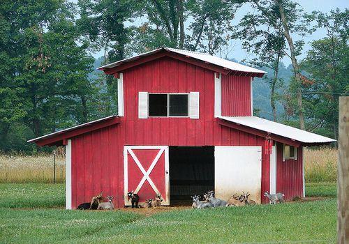 Barn For My Goats Farm Goat Shelters Pinterest