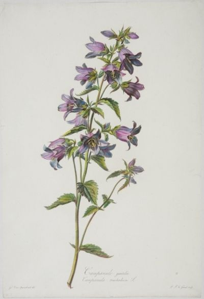 gerard van spaendonck flowers drawn from nature