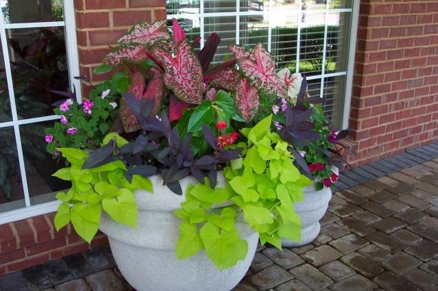 Shade garden container - Container gardens for shade ...