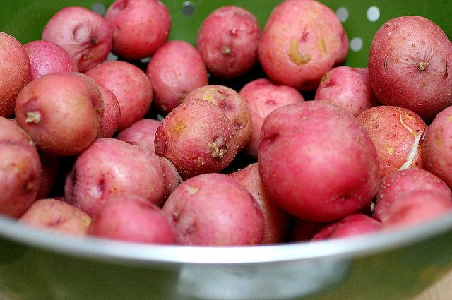 rosanne cash's potato salad | food and more | Pinterest