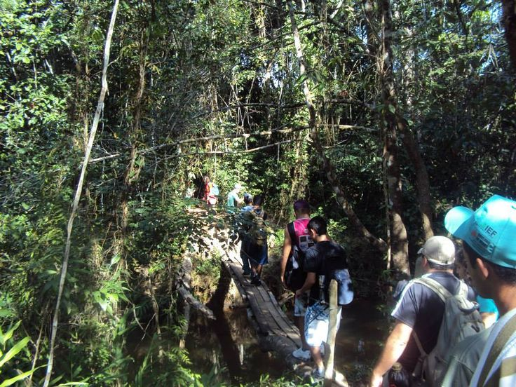 Parque Estadual Da Mata Do Limoeiro 3
