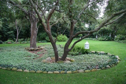 What To Grow Under Oak Trees : We have large trees in the front yard with a stone border around
