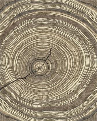 Wood Grain Rug Cabin Fever Pinterest