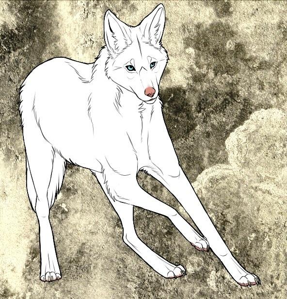Albino Maned Wolf