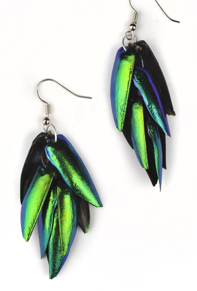 Jewel wing earrings made from beetle wings from thailand