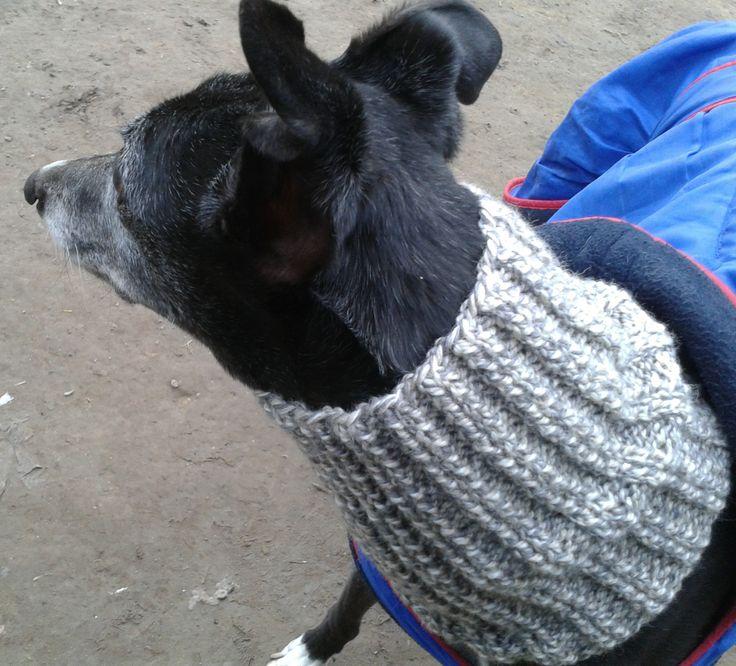 Free Crochet Pattern Dog Snood : Pin by Stephanie Hullinger on animals Pinterest