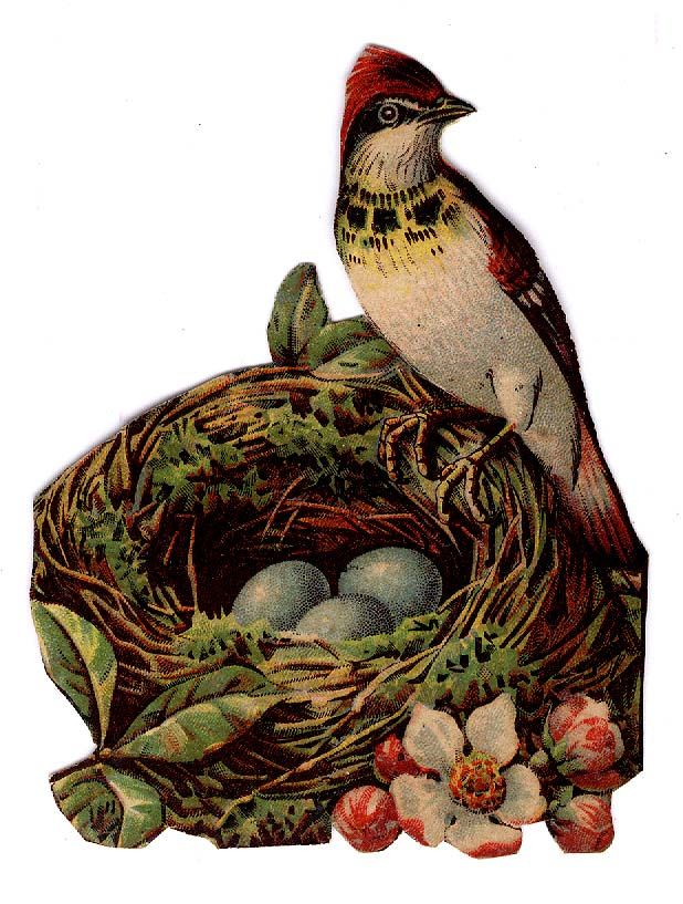 #Victorian #scraps  #ephemera #chromograph #lithograph #bird in #nest with #eggs