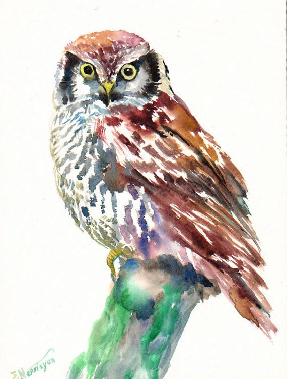 Hawk painting watercolor - photo#23