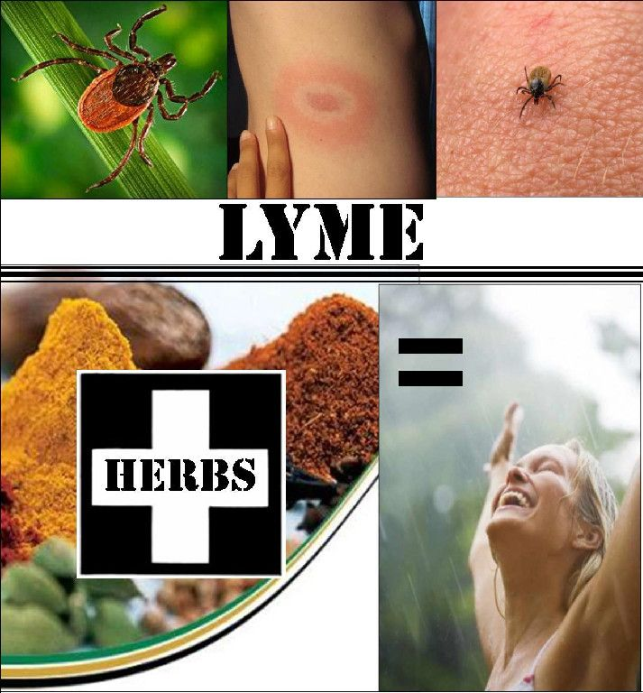 Japanese knotweed for lyme disease other benefits at iodine
