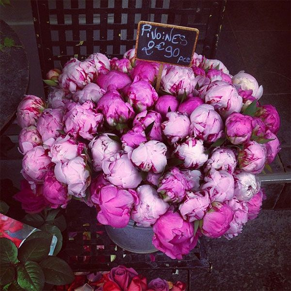 Peonies Season Inspiration Of peony season | My Style | Pinterest Photo