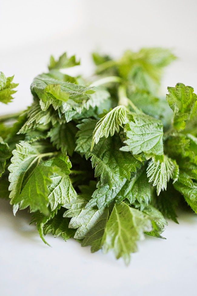 at Home: Nettle Pesto Pasta - with some info on how to cook nettles ...