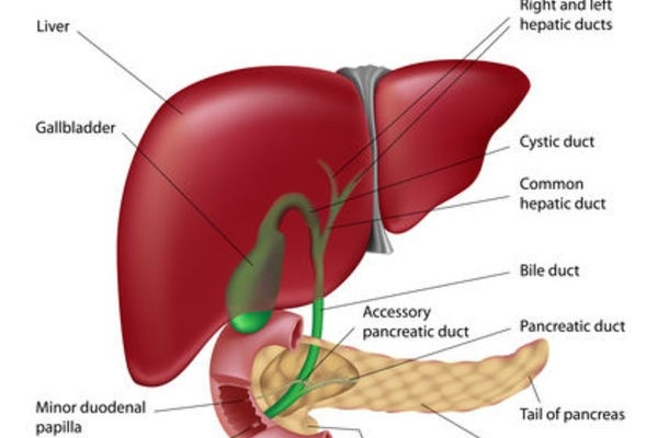 liver problem ultrasound