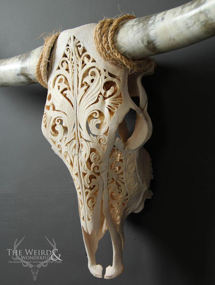 Doberdor carved texas longhorn cow skull bos taurus