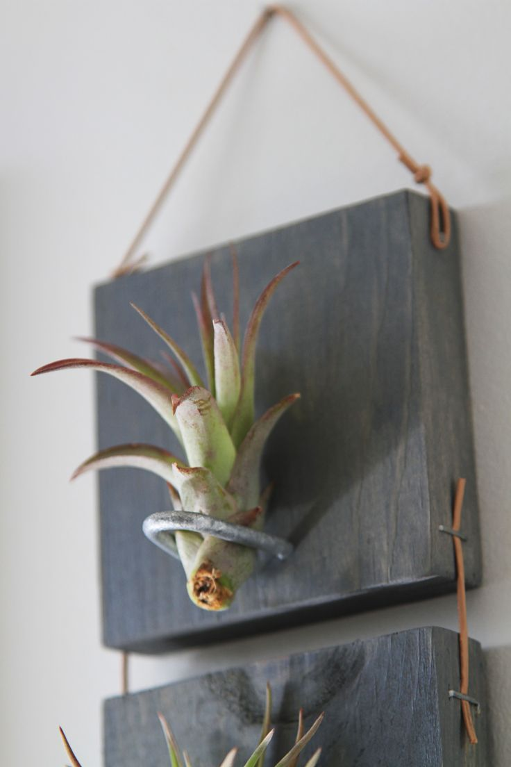 Driftwood trio air plant wall hanging flower garden for Air plant wall hanger