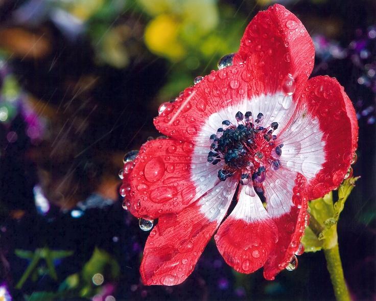 Image Result For Daniel Stowe Botanical Garden