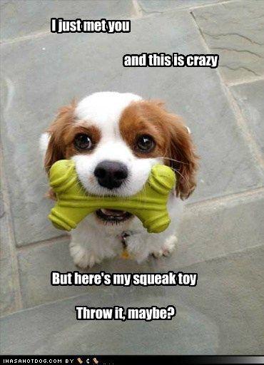 squeak toy