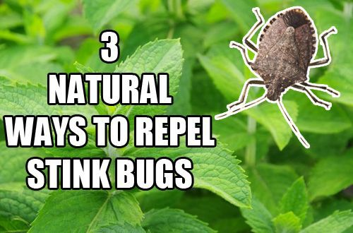 3 natural ways to repel stink bugs pin. Black Bedroom Furniture Sets. Home Design Ideas