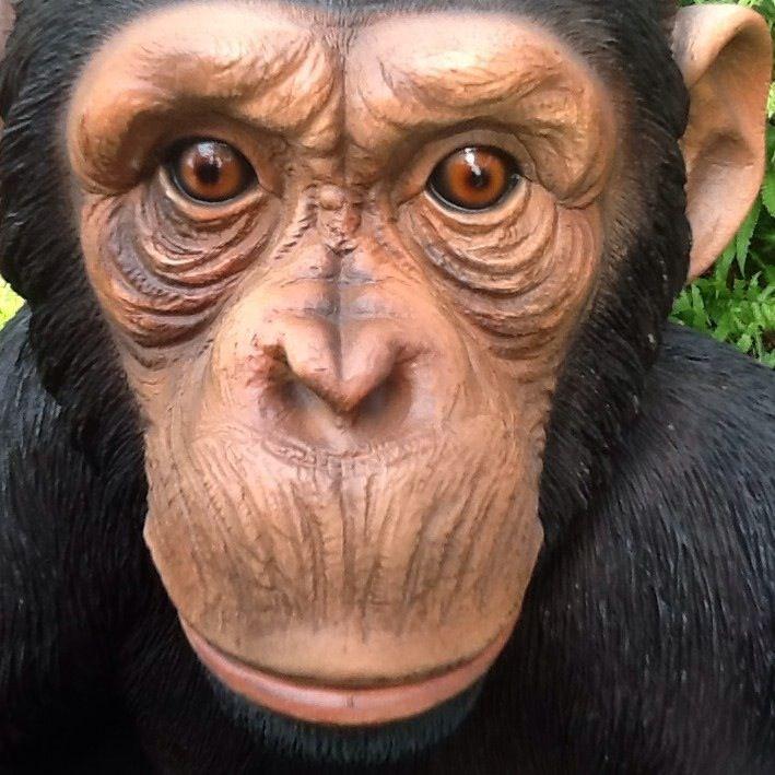 Vivid Arts Monkey selfie. GardenSite.co.uk #ape