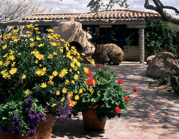 Adding Color In Pots Arizona Plants That Will Survive In